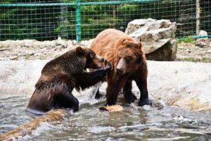 Притулок для бурих ведмедів