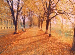 Липовая аллея в Ужгороде