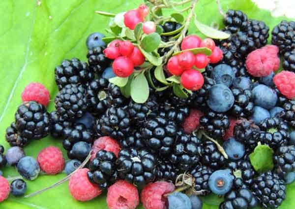 лісові ягоди