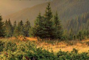 Ужанский национальный природный парк