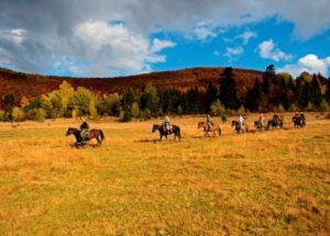 Катание на конях в Закарпатье